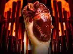 mander organs